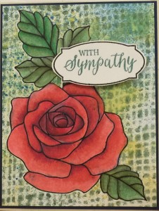 Rose Wonder Sympathy